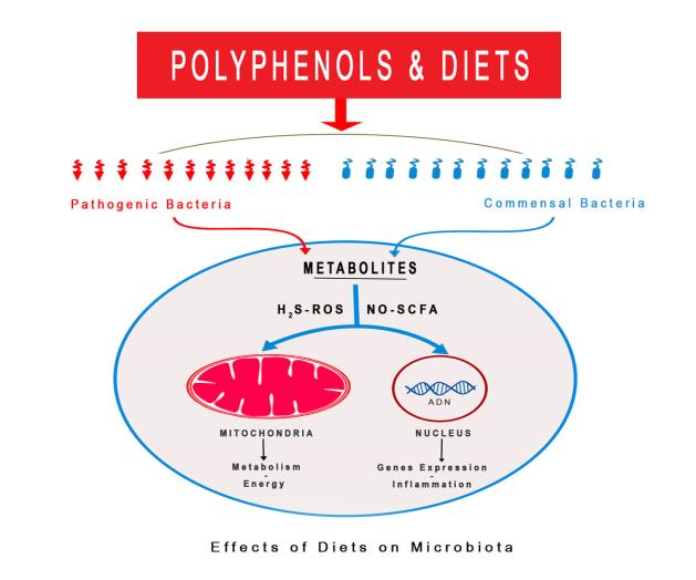 Microbiota, Polyphenols and Metabolites: Strategic Topic